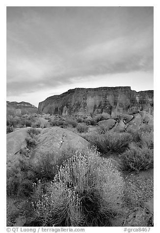 Sage flowers, wall, and cloud, Surprise Valley, sunset. Grand Canyon National Park (black and white)