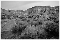 Flowers and mesas in Surprise Valley near Tapeats Creek, dusk. Grand Canyon National Park, Arizona, USA. (black and white)