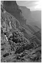 Thunder Spring and Tapeats Creek, morning. Grand Canyon National Park, Arizona, USA. (black and white)