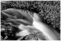 Thunder River stream with red flowers. Grand Canyon National Park ( black and white)