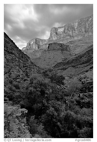 Tapeats Creek, dusk. Grand Canyon National Park (black and white)