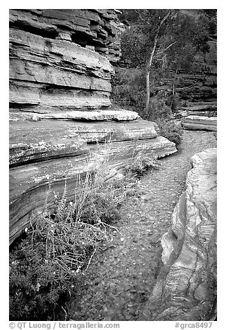 Stream in Deer Creek Narrows. Grand Canyon National Park (black and white)