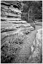 Stream in Deer Creek Narrows. Grand Canyon National Park ( black and white)