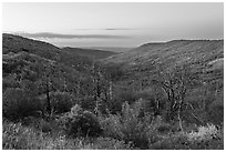 Canyon slopes covered in fall foliage at sunrise. Mesa Verde National Park ( black and white)