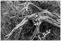 Close up of leaves, fallen wood and grasses. Mesa Verde National Park, Colorado, USA. (black and white)