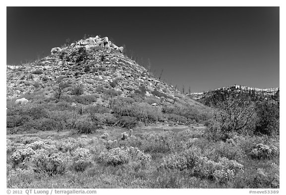 Mesas in autumn. Mesa Verde National Park (black and white)