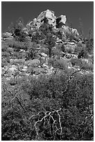 Outcrop with shurbs in fall foliage. Mesa Verde National Park, Colorado, USA. (black and white)