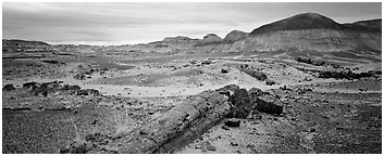 Prehistoric landscape with petrified truncs. Petrified Forest National Park (Panoramic black and white)