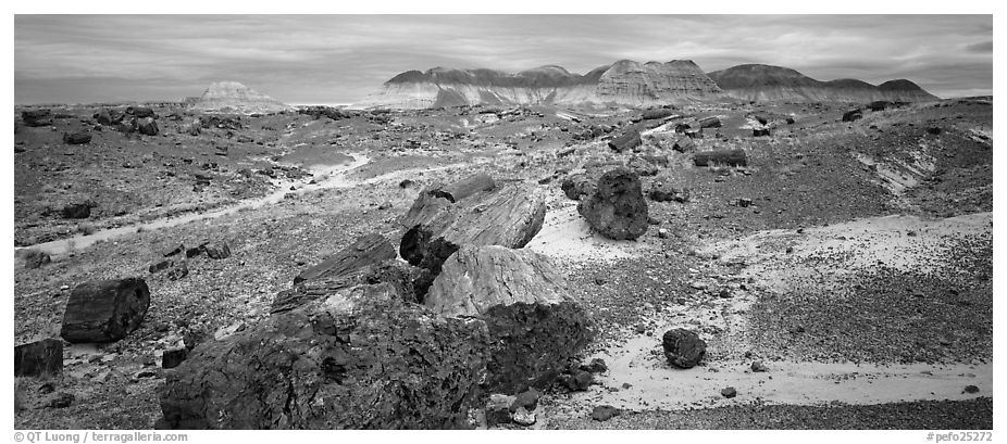 Landscape of colorful petrified logs and badlands. Petrified Forest National Park (black and white)