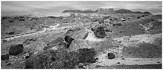 Landscape of colorful petrified logs and badlands. Petrified Forest National Park (Panoramic black and white)