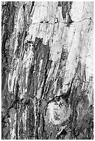 Detail of Triassic Era fossilized wood. Petrified Forest National Park ( black and white)