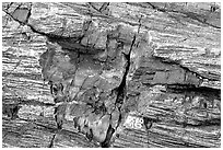 Petrified log detail with bark. Petrified Forest National Park, Arizona, USA. (black and white)