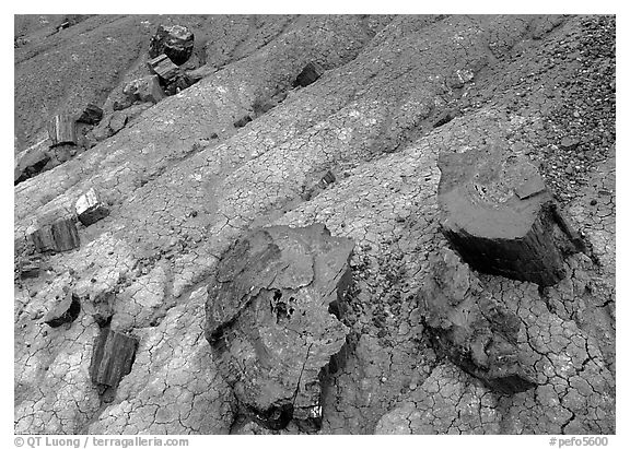 Red slices of petrified wood and blue clay, Long Logs area. Petrified Forest National Park (black and white)