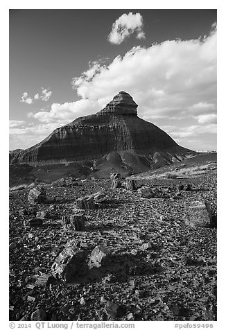 Petrified wood and eroded monolith. Petrified Forest National Park (black and white)