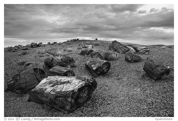 Large petrified wood logs and hill, Crystal Forest. Petrified Forest National Park (black and white)