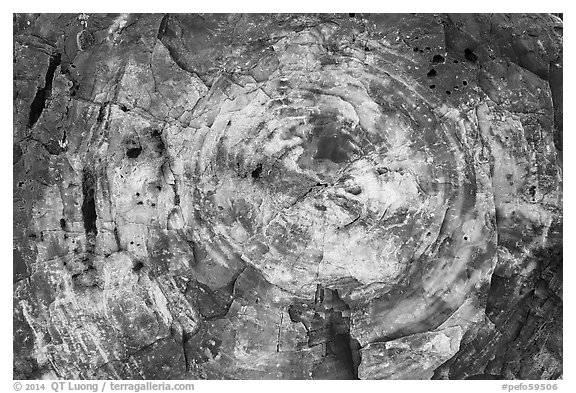 Section of colorful petrified wood, Rainbow Forest. Petrified Forest National Park (black and white)