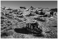 Giant Logs, Rainbow Forest. Petrified Forest National Park ( black and white)