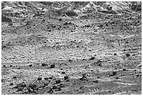 Scattered Jasper Forest petrified wood and badlands. Petrified Forest National Park ( black and white)