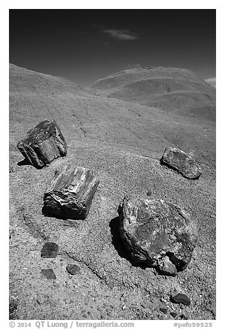 Petrified wood on red badlands,. Petrified Forest National Park (black and white)
