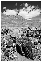 Black petrified wood and red Painted Desert badlands. Petrified Forest National Park ( black and white)