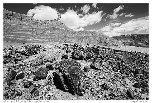 Black Forest, Black Forest Wilderness. Petrified Forest National Park (black and white)