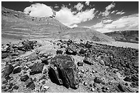Black Forest, Black Forest Wilderness. Petrified Forest National Park ( black and white)