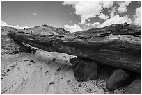 Ancient petrified log laying across arroyo, forming natural bridge called Onyx Bridge. Petrified Forest National Park ( black and white)