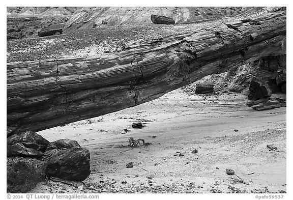 Natural bridge formed by petrified log. Petrified Forest National Park (black and white)