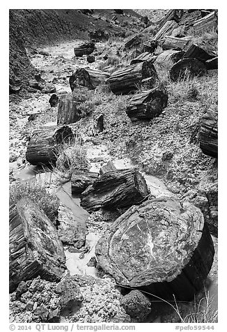 Logs of black petrified wood in Painted Desert. Petrified Forest National Park (black and white)