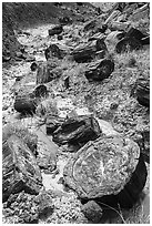 Logs of black petrified wood in Painted Desert. Petrified Forest National Park ( black and white)