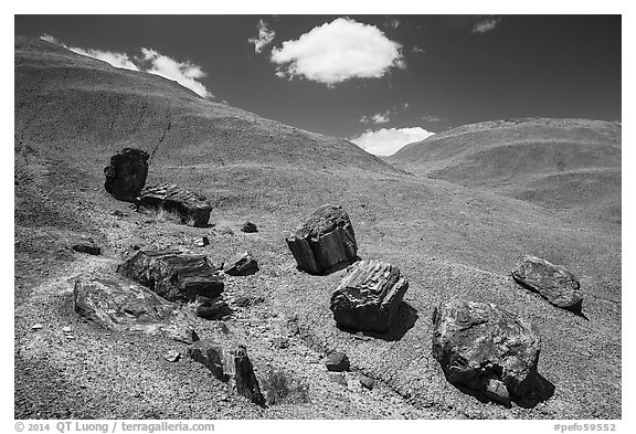 Red Desert badlands hills and black petrified logs. Petrified Forest National Park (black and white)