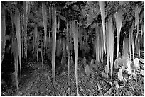 Icicles in Mossy Cave. Bryce Canyon National Park, Utah, USA. (black and white)