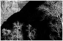 Bare cottonwoods and shadows in Zion Canyon. Zion National Park, Utah, USA. (black and white)