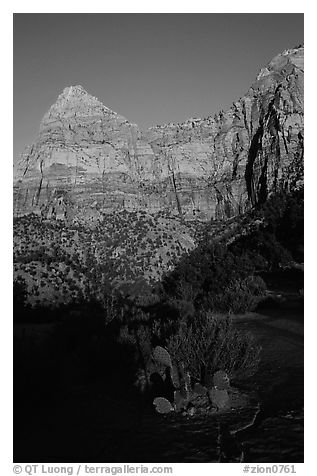 Cactus and Watchman at sunset. Zion National Park (black and white)