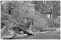 Virgin river at  entrance of the Narrows. Zion National Park ( black and white)