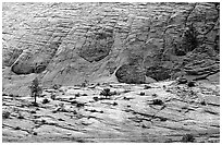 Sandstone checkboard patterns, Zion Plateau. Zion National Park ( black and white)