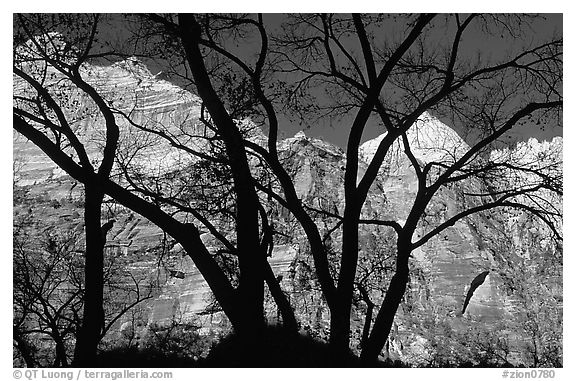 Canyon walls seen through bare trees, Zion Canyon. Zion National Park (black and white)