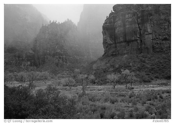 Rainy afternoon, Zion Canyon. Zion National Park (black and white)