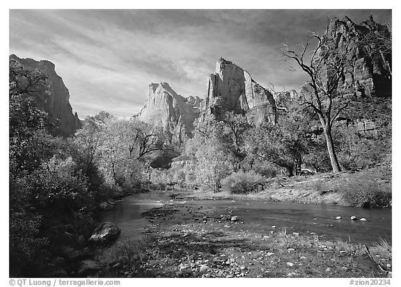Court of the Patriarchs, Virgin River, and trees in fall color. Zion National Park (black and white)