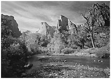 Court of the Patriarchs, Virgin River, and trees in fall color. Zion National Park, Utah, USA. (black and white)
