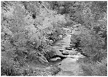 Virgin river, trees in fall foliage, and boulders. Zion National Park, Utah, USA. (black and white)