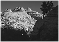 Pine and hoodoos near Canyon View, early morning. Zion National Park, Utah, USA. (black and white)