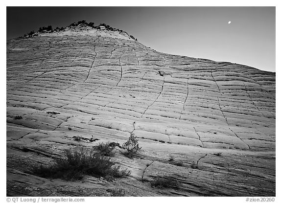 Checkerboard Mesa seen from base and moon. Zion National Park (black and white)