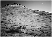 Checkerboard Mesa seen from base and moon. Zion National Park, Utah, USA. (black and white)