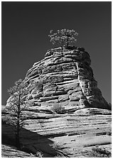Moon and pine on red sandstone, Zion Plateau. Zion National Park, Utah, USA. (black and white)