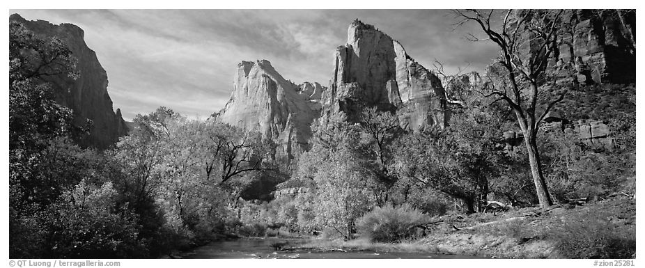 Landscape with trees and tall sandstone towers. Zion National Park (black and white)