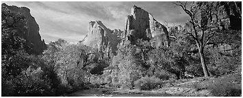 Landscape with trees and tall sandstone towers. Zion National Park (Panoramic black and white)