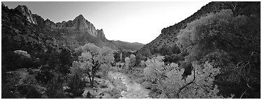 Virgin River, trees, and Watchman at sunset. Zion National Park (Panoramic black and white)
