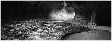 Tunnel-like opening and autumn leaves. Zion National Park (Panoramic black and white)