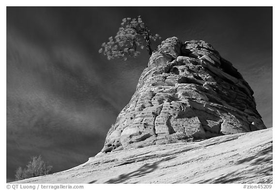 Twisted sandstone formation topped by tree. Zion National Park (black and white)